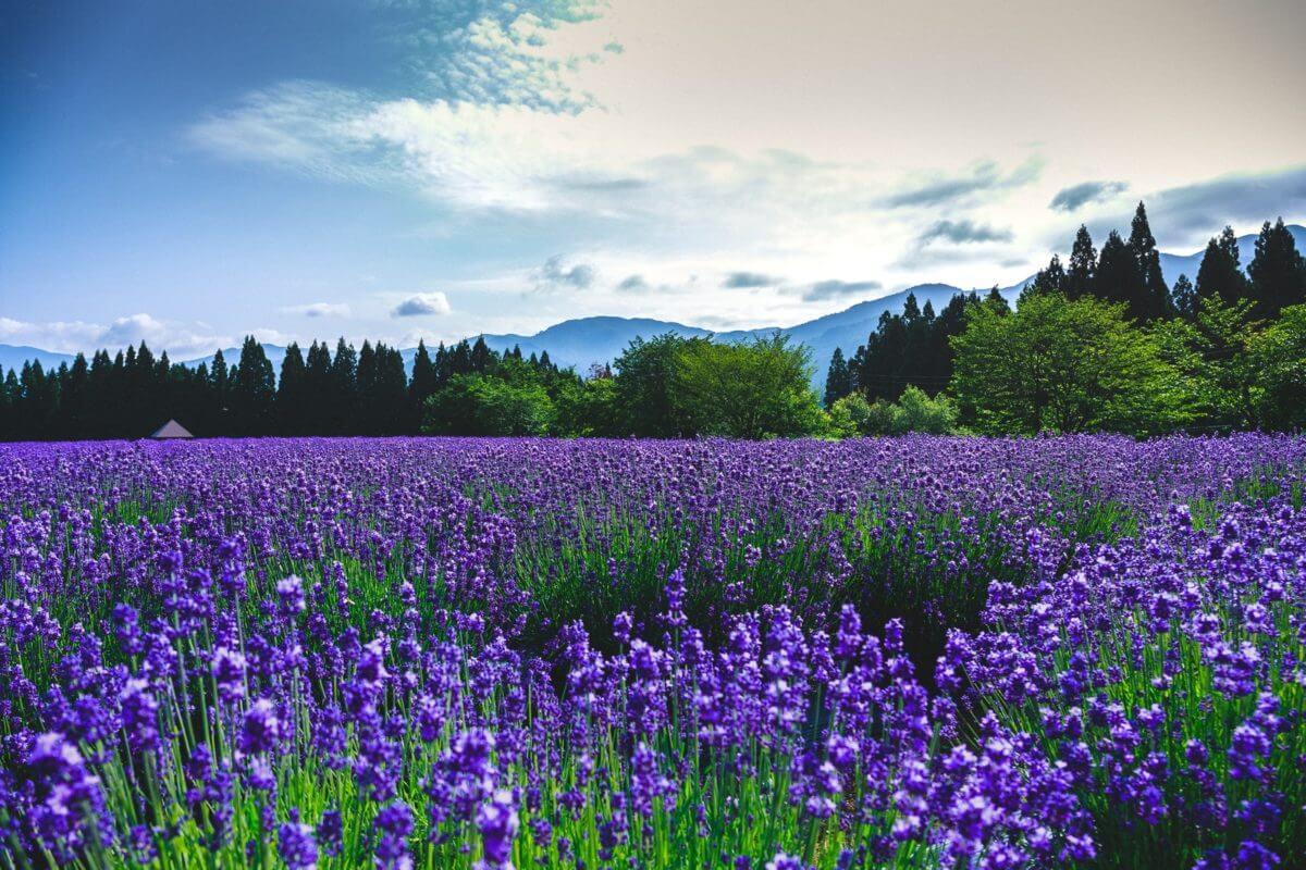 秋田の景色